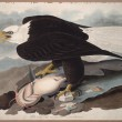 Today in History: John James Audubon