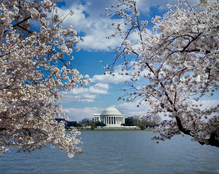 Jefferson Memorial with cherry blossoms, Washington, D.C.