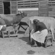 Mrs. Watkins, FSA borrower, and her helper, milking cows