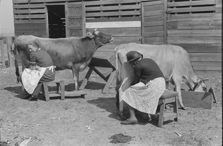 Mrs. Watkins, FSA borrower, and her helper, milking cows