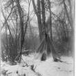 In the forest - North Dakota