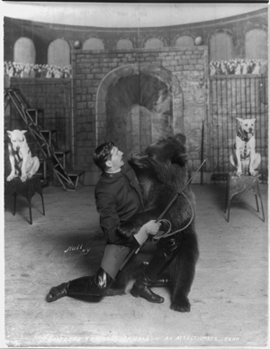 Bostock's trained animals -- An affectionate bear