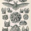 Primary Source Spotlight: Bats & Vampires